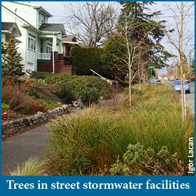 Monitoring Trees in Street-side Stormwater Management Facilities